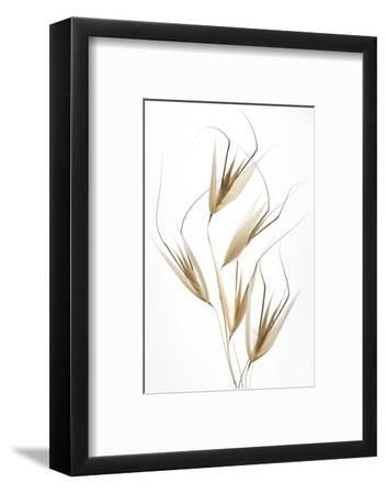 Delicacy of nature-Thierry Lagandré (Transgressed-Framed Photographic Print