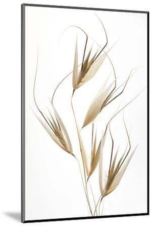 Delicacy of nature-Thierry Lagandré (Transgressed-Mounted Photographic Print