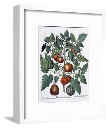 Tomatoes and melons, 1613-Unknown-Framed Giclee Print