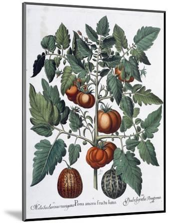 Tomatoes and melons, 1613-Unknown-Mounted Giclee Print