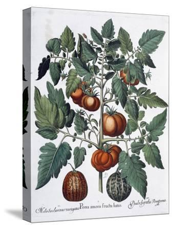 Tomatoes and melons, 1613-Unknown-Stretched Canvas Print