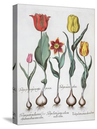 Tulips, 1613-Unknown-Stretched Canvas Print