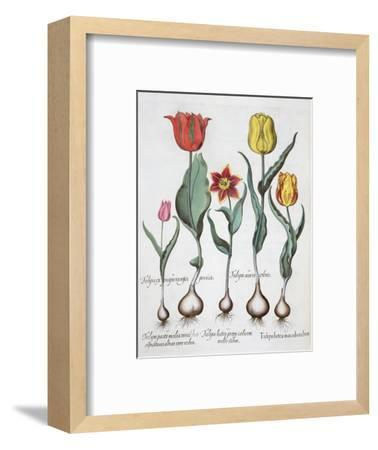 Tulips, 1613-Unknown-Framed Giclee Print