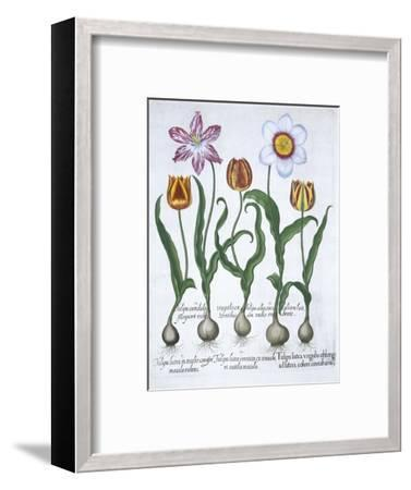 Five tulips, 1613-Unknown-Framed Giclee Print
