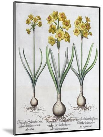 Narcissus, 1613-Unknown-Mounted Giclee Print