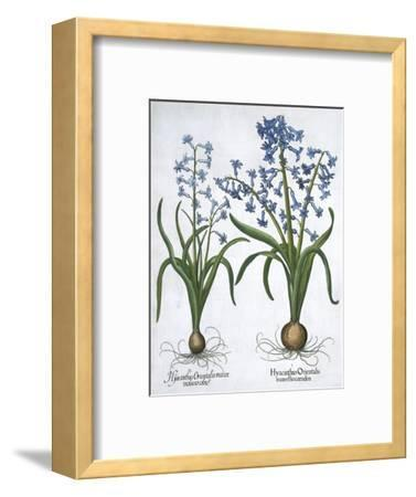 Two blue hyacinths, 1613-Unknown-Framed Giclee Print