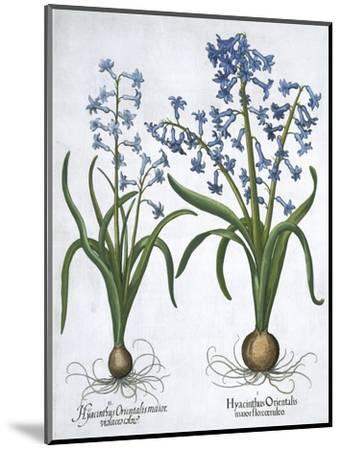Two blue hyacinths, 1613-Unknown-Mounted Giclee Print