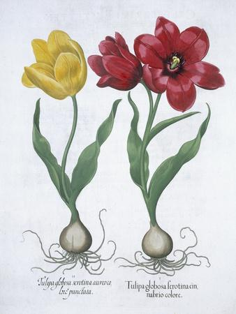 Red and yellow tulip, 1613-Unknown-Framed Giclee Print