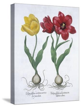 Red and yellow tulip, 1613-Unknown-Stretched Canvas Print