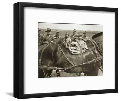 The mascot of the Anzacs, Somme campaign, France, World War I, 1916-Unknown-Framed Photographic Print
