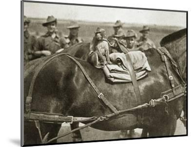The mascot of the Anzacs, Somme campaign, France, World War I, 1916-Unknown-Mounted Photographic Print