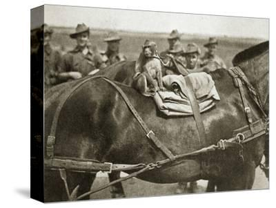 The mascot of the Anzacs, Somme campaign, France, World War I, 1916-Unknown-Stretched Canvas Print