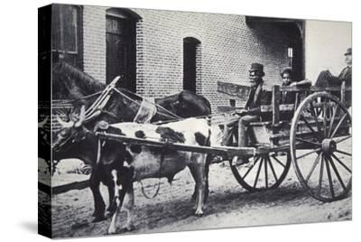 Mark Twain, American author, in the back of a horse and ox drawn cart, c1900-Unknown-Stretched Canvas Print