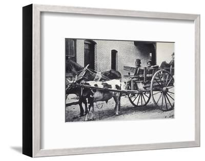 Mark Twain, American author, in the back of a horse and ox drawn cart, c1900-Unknown-Framed Photographic Print