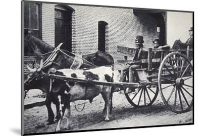 Mark Twain, American author, in the back of a horse and ox drawn cart, c1900-Unknown-Mounted Photographic Print