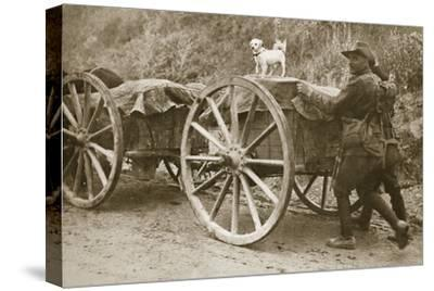 Australian troops returning from the trenches with their mascot, World War I, France, 1916-Unknown-Stretched Canvas Print