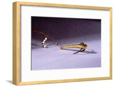 Fish hook-Werner Forman-Framed Giclee Print