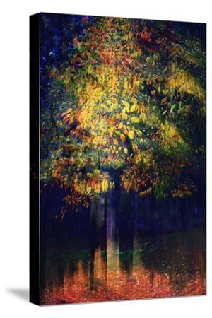 Exuberance 2-Ursula Abresch-Stretched Canvas Print