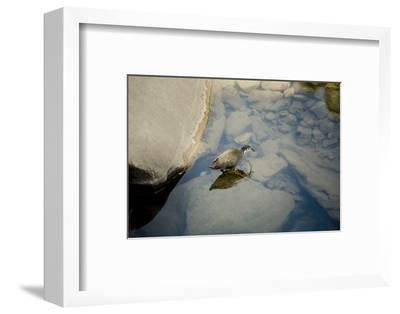 Into the blue-Valda Bailey-Framed Photographic Print
