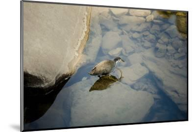 Into the blue-Valda Bailey-Mounted Photographic Print