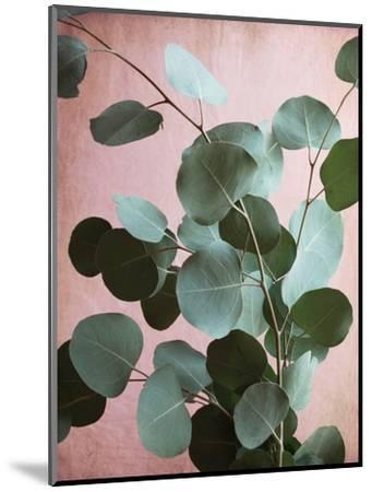 Sage Eucalyptus No. 1-Lupen Grainne-Mounted Photographic Print