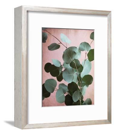 Sage Eucalyptus No. 1-Lupen Grainne-Framed Photographic Print