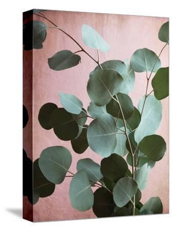 Sage Eucalyptus No. 1-Lupen Grainne-Stretched Canvas Print