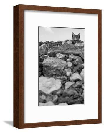 C'est Moi!-Jon Bertelli-Framed Photographic Print