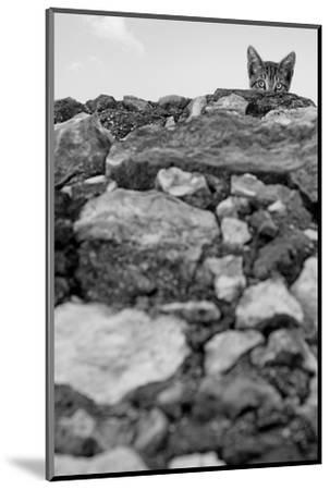 C'est Moi!-Jon Bertelli-Mounted Photographic Print