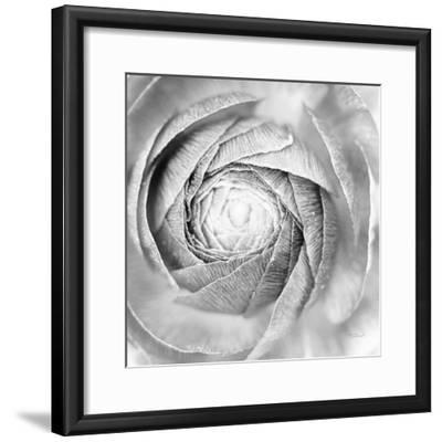 Ranunculus Abstract I BW Light-Laura Marshall-Framed Photographic Print