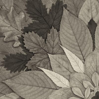 Leaf Mandala A-THE Studio-Framed Photographic Print
