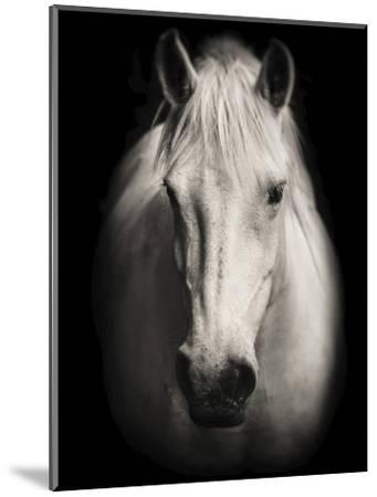 Equus 1-THE Studio-Mounted Giclee Print