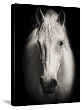 Equus 1-THE Studio-Stretched Canvas Print