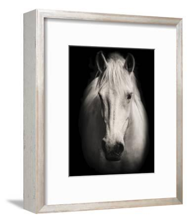 Equus 1-THE Studio-Framed Premium Giclee Print