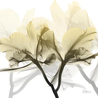 Flaxen Orchid-Albert Koetsier-Framed Photographic Print