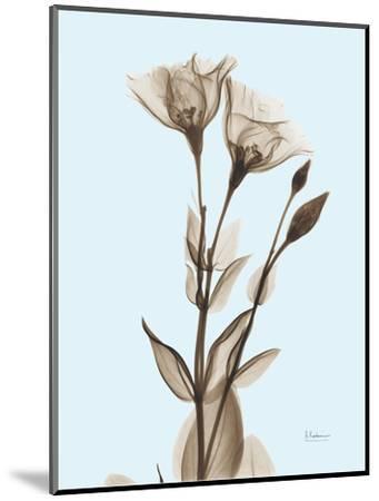 Gentian Sepia-Albert Koetsier-Mounted Photographic Print