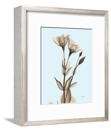 Gentian Sepia-Albert Koetsier-Framed Photographic Print