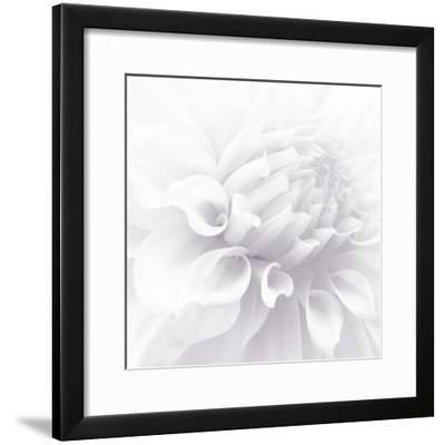 B&W Dahlia R 2-Suzanne Foschino-Framed Photographic Print
