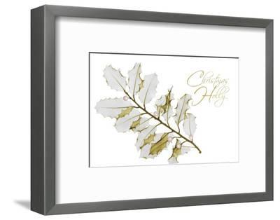 New Holly A L297-Albert Koetsier-Framed Photographic Print