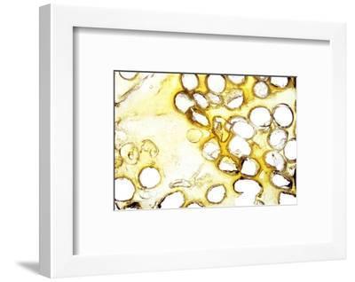 NA_16 [Ria],, 35mm slide-Kika Pierides-Framed Photographic Print