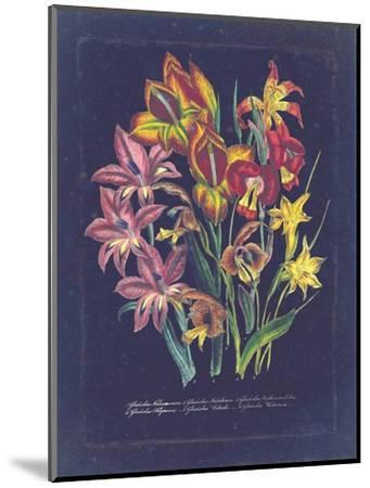 Vintage Dark Floral on Indigo II--Mounted Art Print