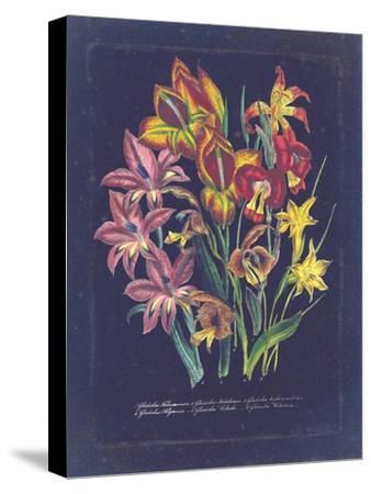 Vintage Dark Floral on Indigo II--Stretched Canvas Print