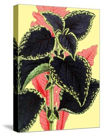 Tropical Leaves--Stretched Canvas Print