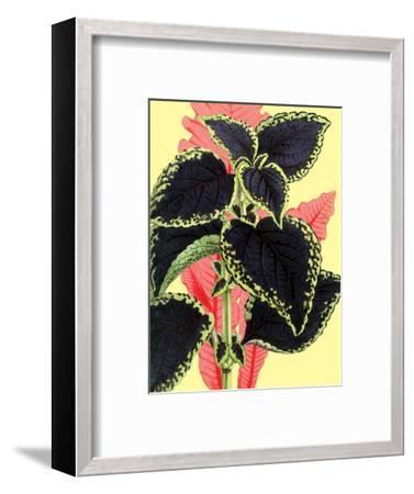 Tropical Leaves--Framed Art Print
