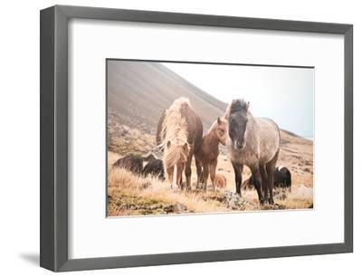 Horses of Hofn I--Framed Art Print