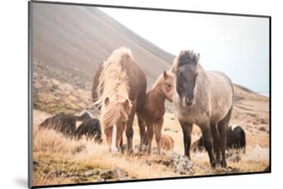 Horses of Hofn I--Mounted Art Print