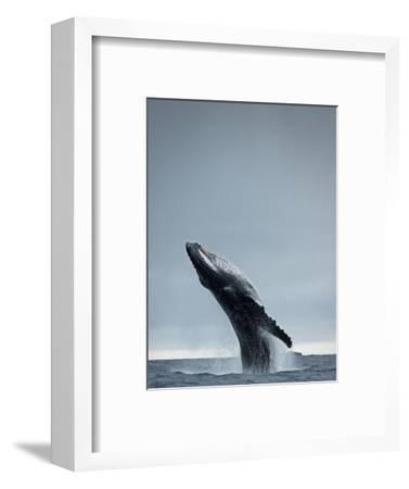 40 Ton-Design Fabrikken-Framed Photographic Print
