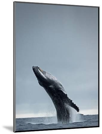 40 Ton-Design Fabrikken-Mounted Photographic Print