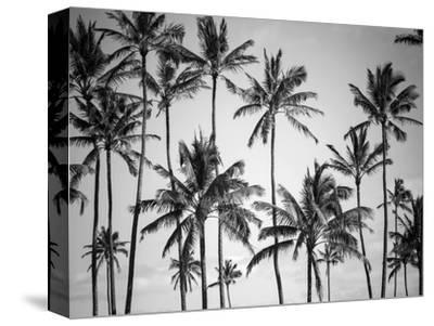 Palm Heaven-Design Fabrikken-Stretched Canvas Print