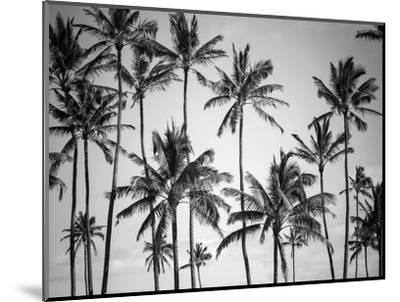 Palm Heaven-Design Fabrikken-Mounted Photographic Print